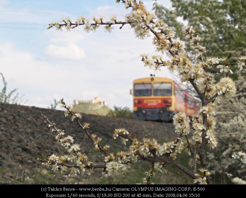 Bzmot, virág és a sümegi vár fotó