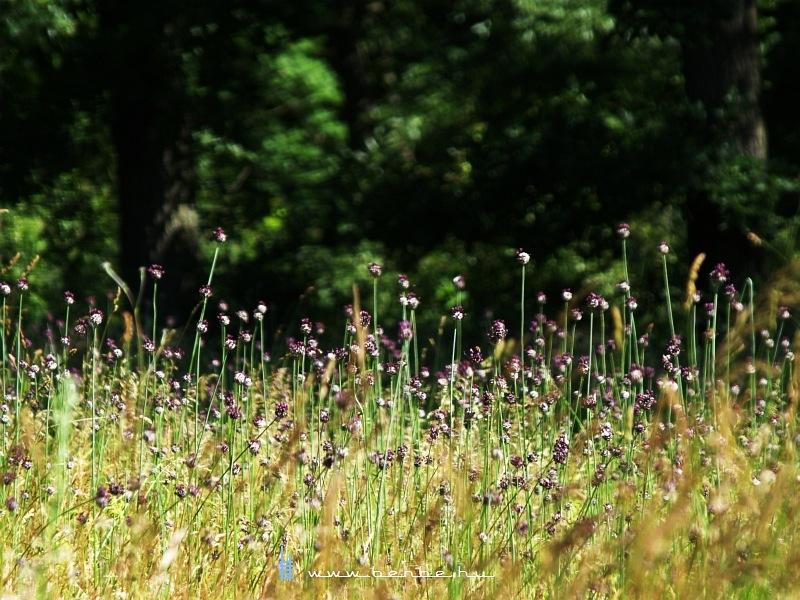Virágok Gánt közelében fotó