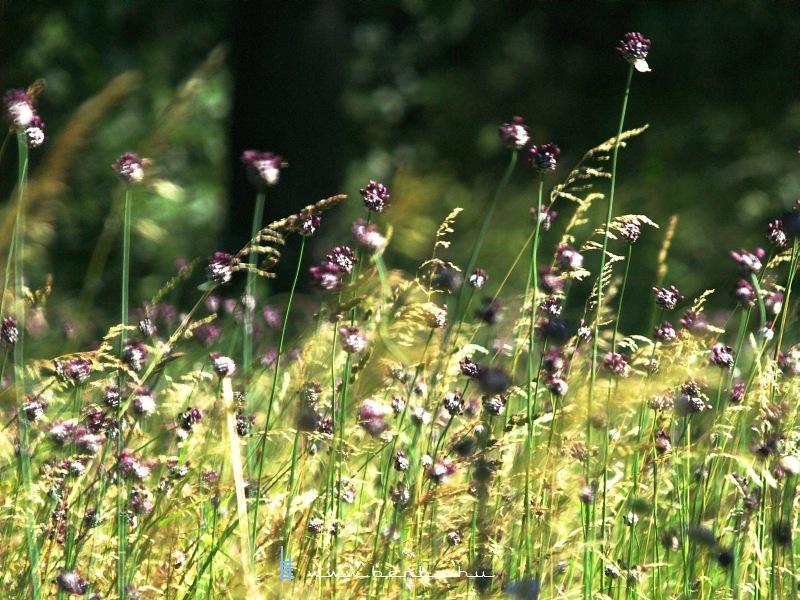 Vadvirágok Gánt közelében fotó