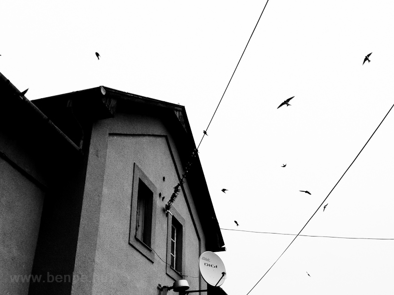 Birds at Dejtár picture