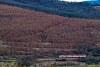 Az 6341-es motorvonat Tar és Mátraverebély között