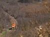 Az M43 1137 Tar és Mátraverebély között halad gépmenetben