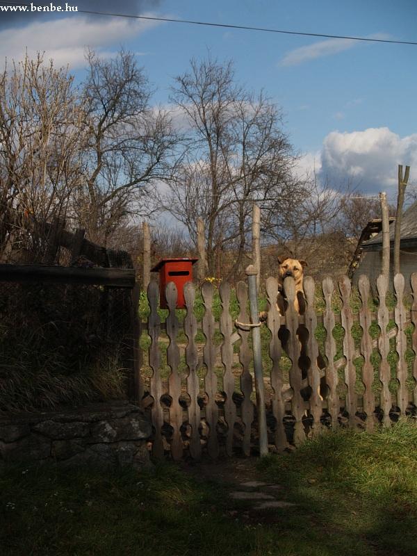 Kutyasátán fotó