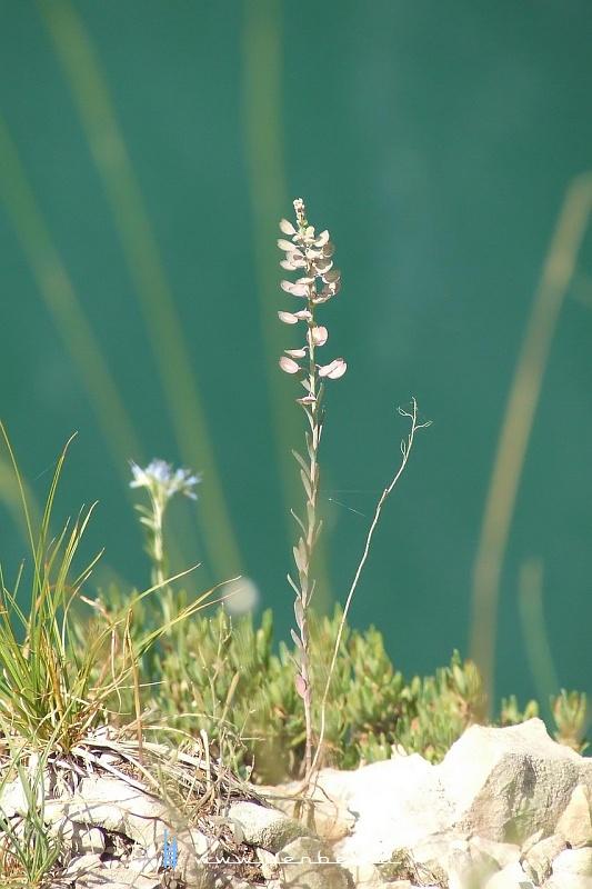 Növény fotó