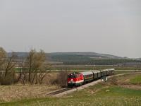 Az ÖBB 2143 051-7 nosztalgiavonattal Sopronnyék-Haracsony (Neckenmarkt-Horitschon, Ausztria) és Doborján-Lakfalva mrh. (Raiding-Lackendorf, Ausztria) között