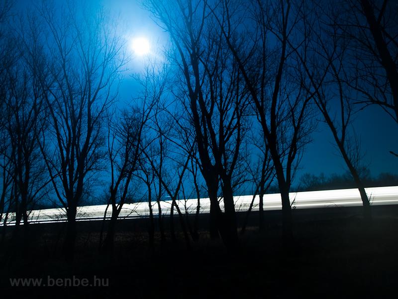 Egyedül az erdőben fotó