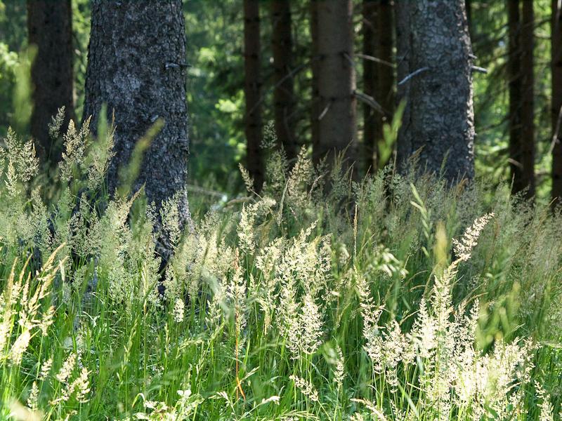 Puchenstubeni erdő fotó