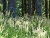 Forest near Puchenstuben