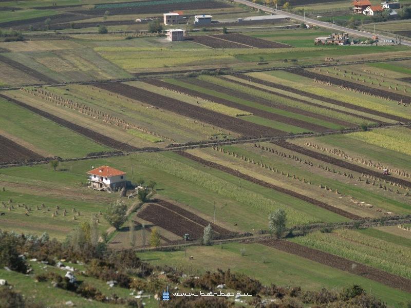 Meglepõ dolog: mezõgazdasági termelés fotó