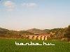 T669 1047 Elbasan és Bisqhem között
