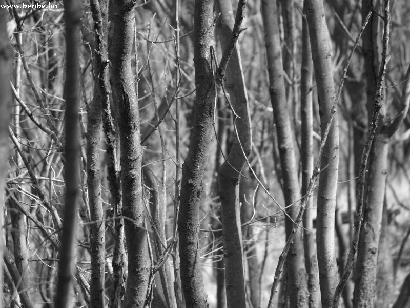 Fák fotó