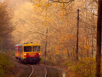 The Bzmot 250 between Szokolya and Berkenye in the autumn forest