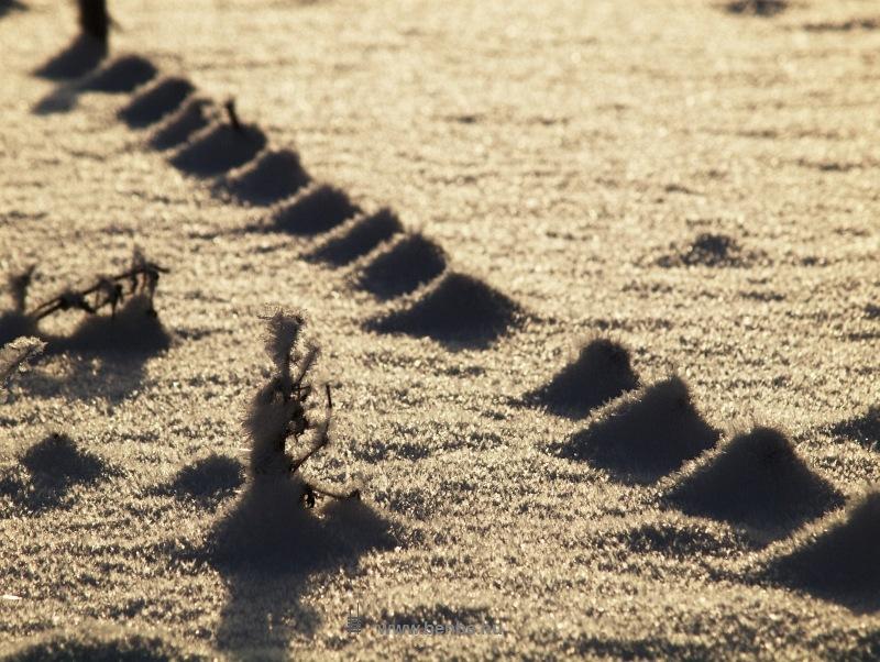 Kukoricaföld a hóban fotó