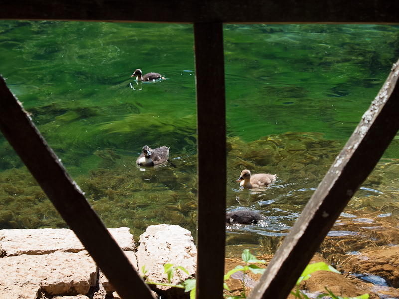 The springs of the river Bosna (Vrelo Bosne Park) nexto to Sarajevo photo