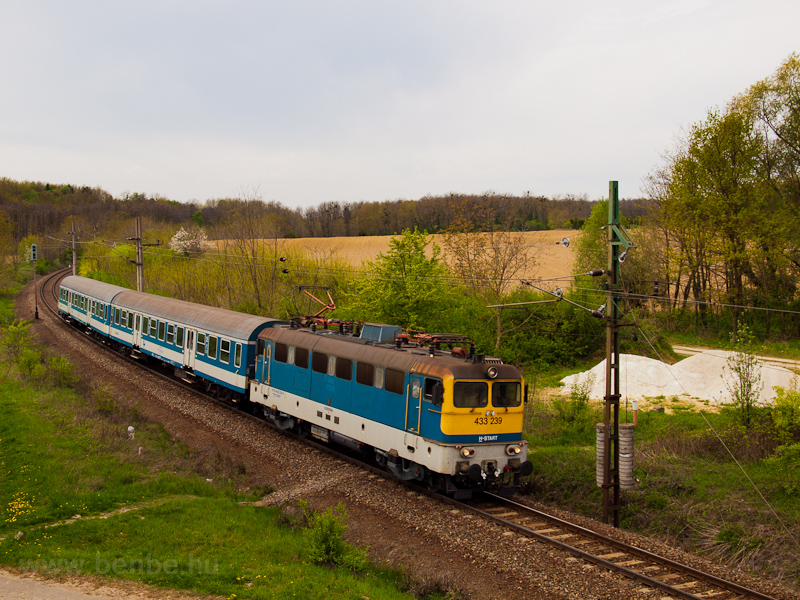 The MÁV-START 433 239 seen  picture