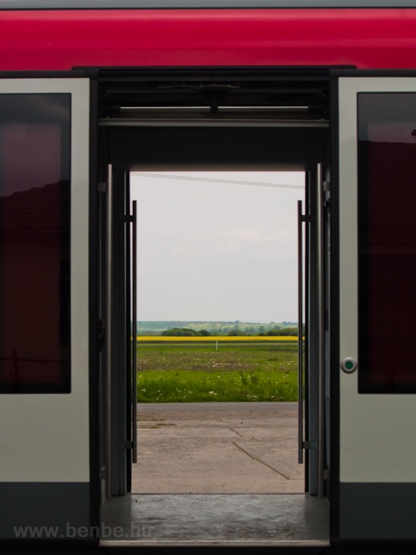 A canola field in the doors of a Desiro railcar photo