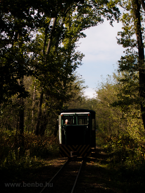 The C50 of the Mesztegnyő Forest Railway somewhere along the line photo