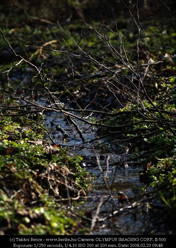 A fák alatt egy kis patak fotó