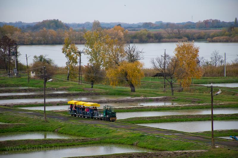 A Szegedi Halgazdasági Kisv fotó