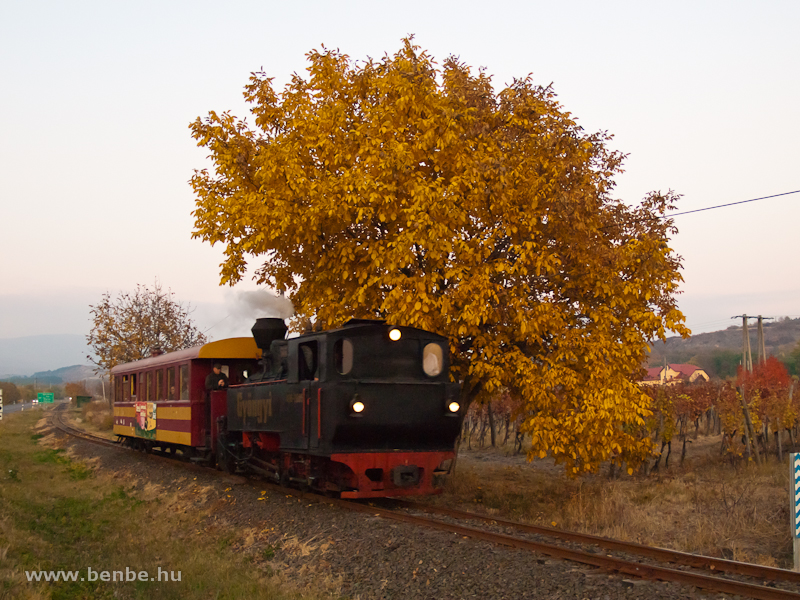 A Mátravasút 490 2005 pályaszámú, Gyöngyi nevű gőzmozdonya Farkasmály-Borpincék és Nyúlmály között fotó