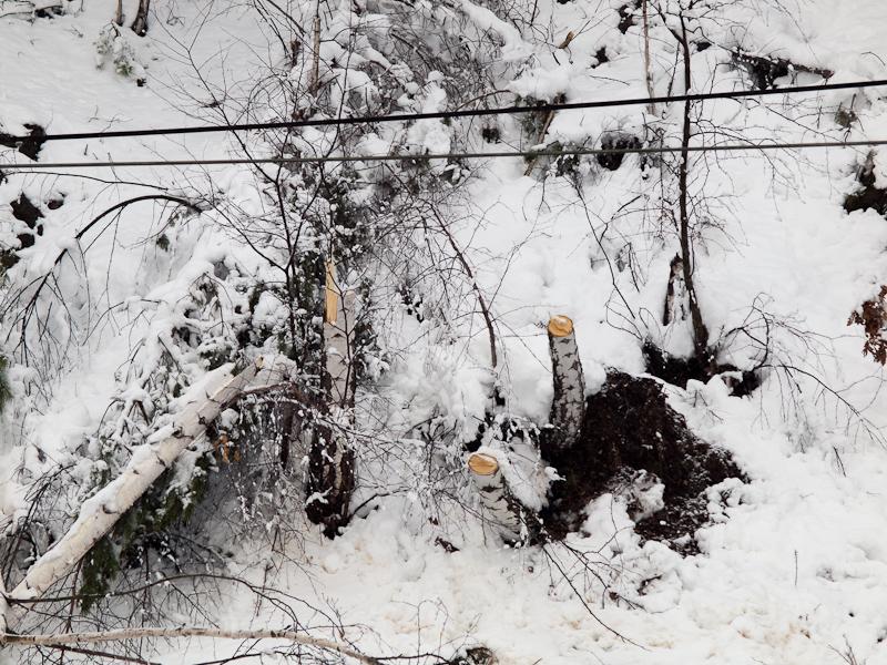 A felsővezetéksek néhány problémásnak ígérkező fától rövid úton megszabadultak fotó
