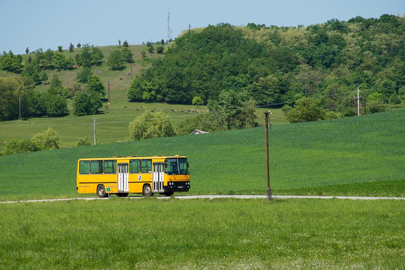 Az ÉMKK/Borsodvolán Ikarus 260.43 CCJ-148 Szőlősardó mellett fotó