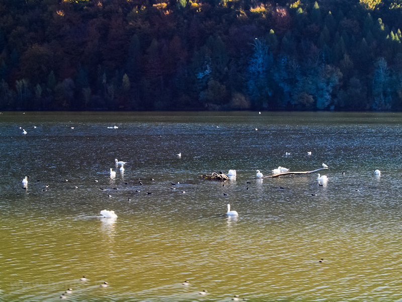 Birds in the reservoir photo