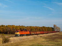 The M62 108 hauling a freight train full with sugar beet between J�szap�ti and J�szd�zsa