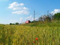 Búzamezõ, pipacsok és Taurus mozdony EuroCity vonattal