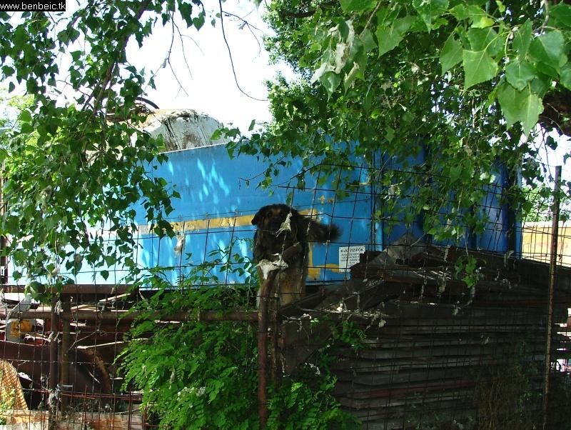 Rákosrendezõ lakói fotó