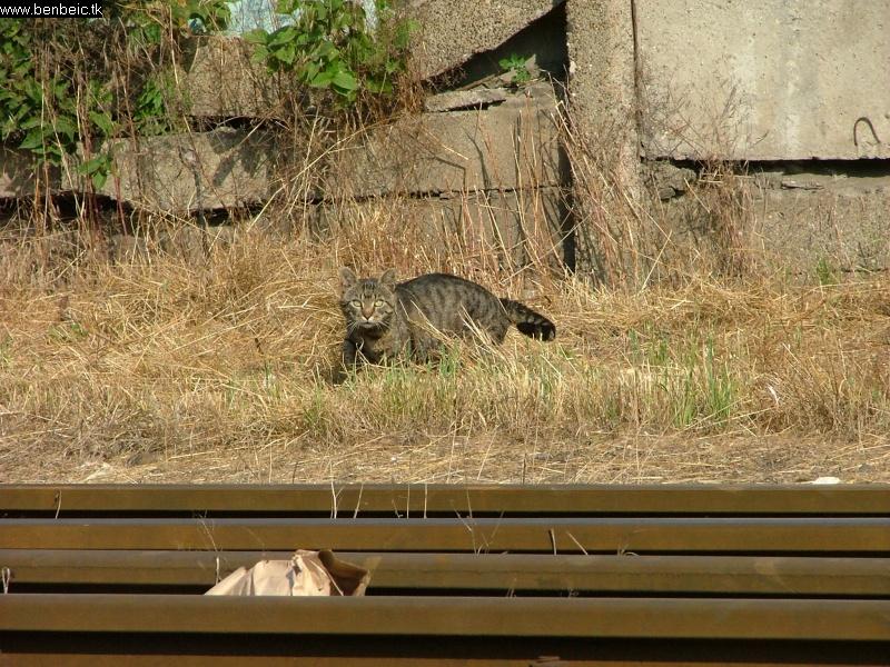 Macska szolgálatban Kispesten fotó