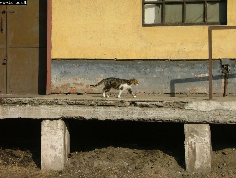 A másik macsek fotó