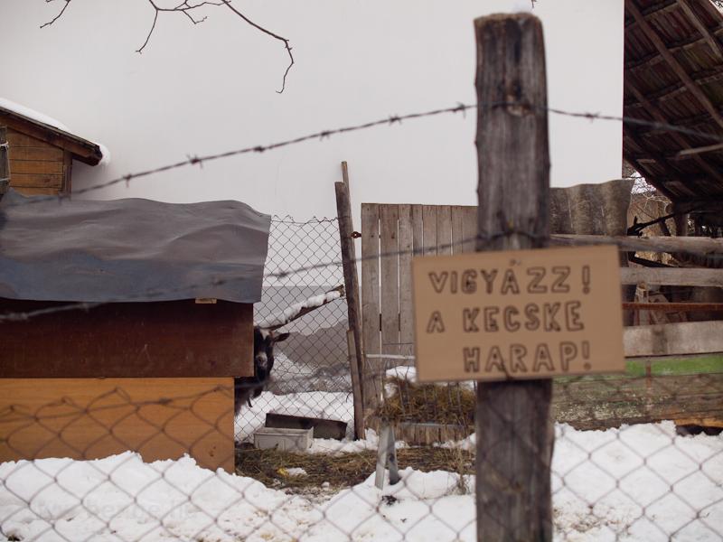 Vigyázz, a kecske harap! fotó