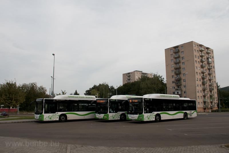 MVK MAN-gyártmányú buszok Felső-Majláthban fotó