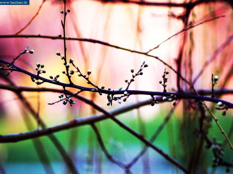 A hajnal színei fotó