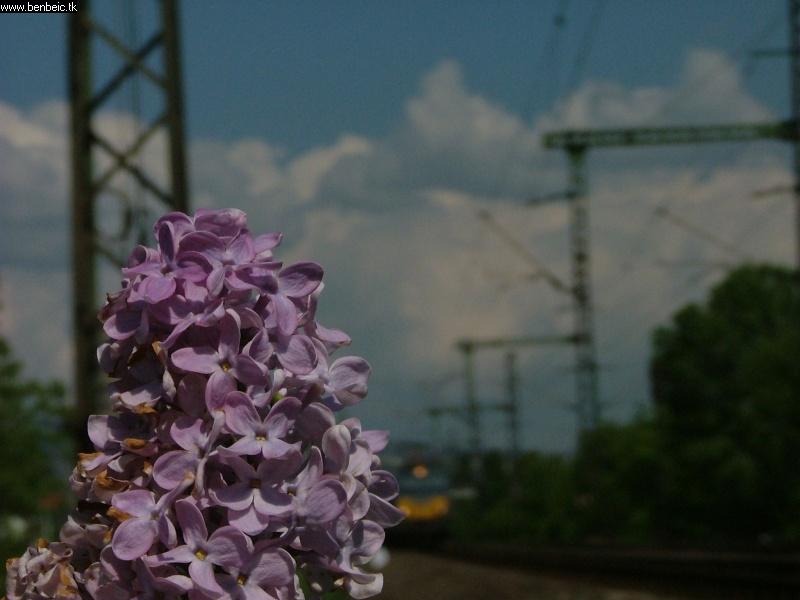 V63 037 Budafoknál fotó