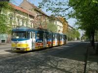 Bengálik rövid reneszánsza Szegeden