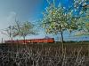A MÁV-START MDmot 3005 Konyár és Derecske-Vásártér között