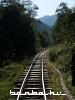 Pusztítás a Felsővisói Erdei Vasúton