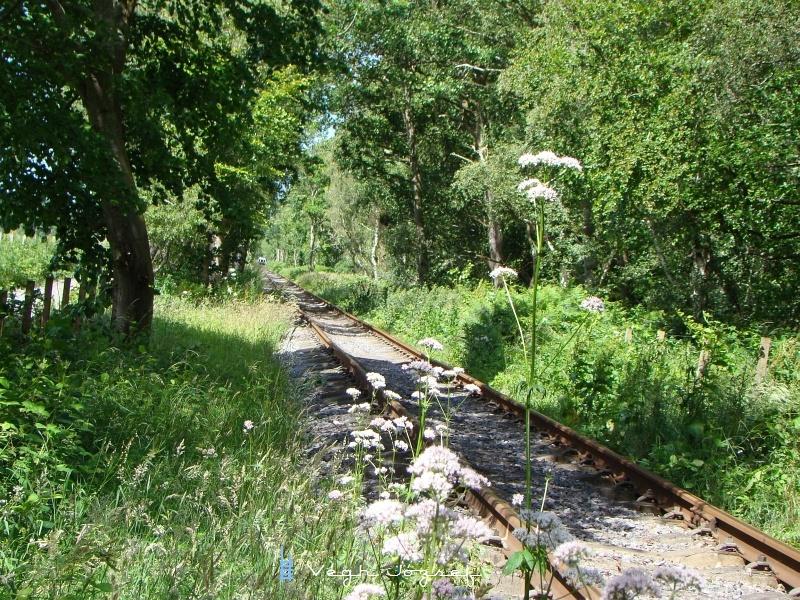Ez pedig a másik irányban, ahol látszik is a pálya vége. Mivel sok talpfára szerelt sínt láttam, remélhetőleg tovább épülhet a vasút és hamarosan a másik végpont a város parkjában lesz. fotó