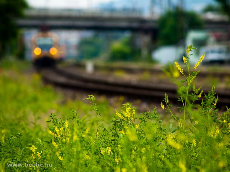 BDVmot és sárga virág Rákosrendezőn fotó