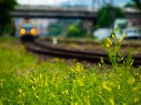 BDVmot és sárga virág Rákosrendezőn