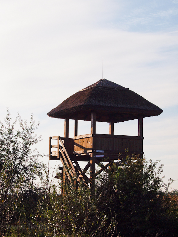 Bird watch tower at Dinnyés photo