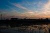 HÉV a napnyugtában Pannóniatelepnél a szentendrei vonalon
