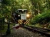 A Nagybörzsönyi Erdei Vasút 82 36 519 Ó-Nagyírtáspuszta állomáson