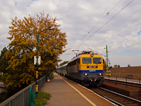 The MÁV-TR 431 311 seen at the autumn Nagymaros-Visegrád