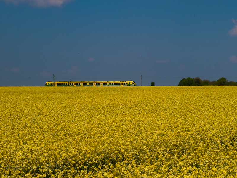 FLIRT in the rapeseed field picture