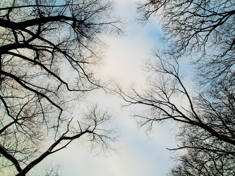 Fák a szokolyai erdőben fotó