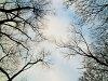 Fák a szokolyai erdőben