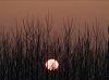 A felkelõ Nap Vámosgyörkön